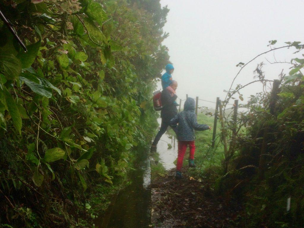 Levada Wanderung in Faial (Azoren)