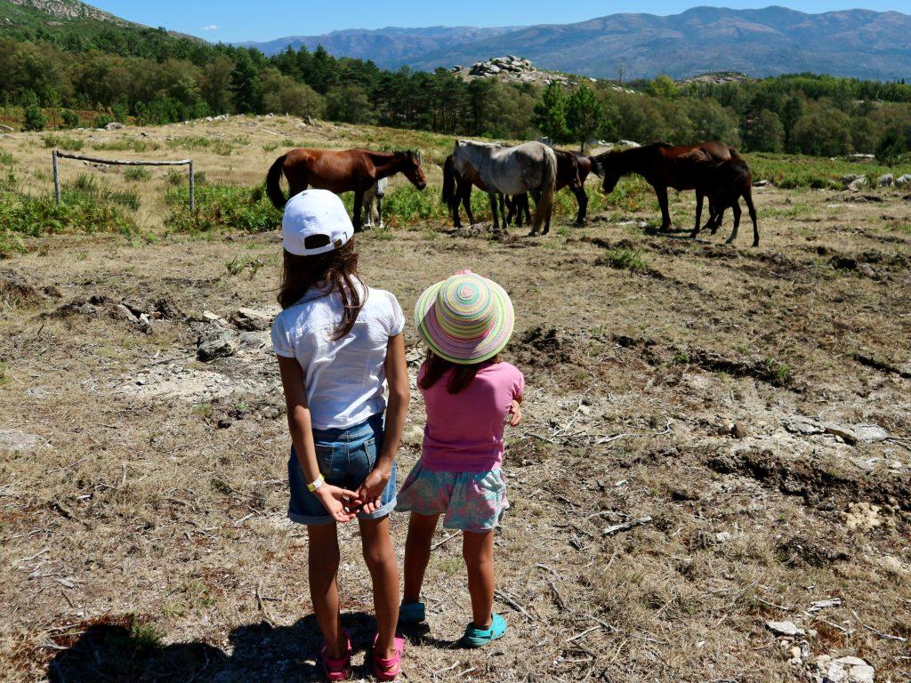 Garrano-Ponys an der Porta do Mezio